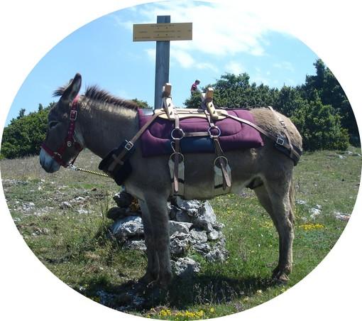 âne au roc paradet